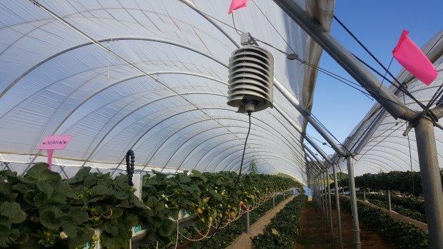 Sensoren versnellen innovatie in landbouw