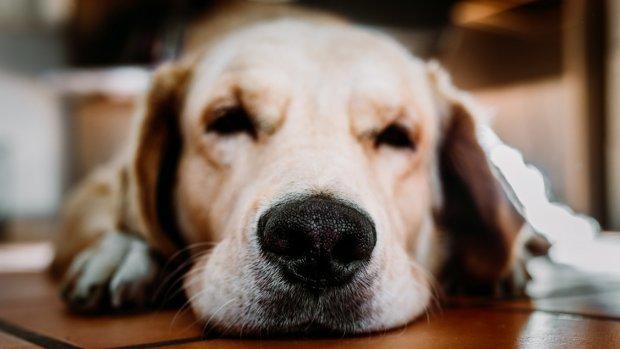 Mag je een hond als je arm bent?