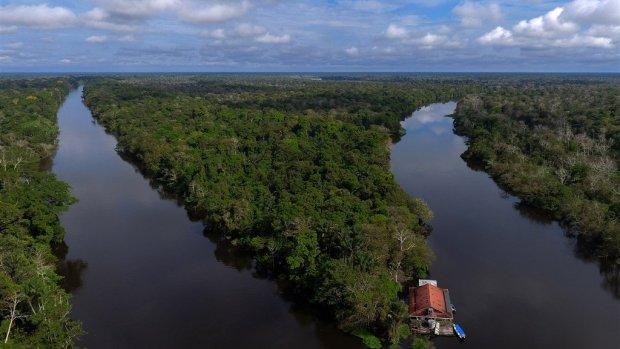 Onderzoekers: aanplanten nieuw bos kan opwarming aarde keren