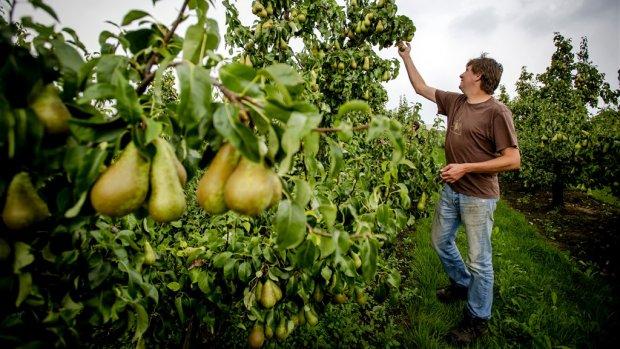 Fruittelers slaan handen ineen voor betere prijs