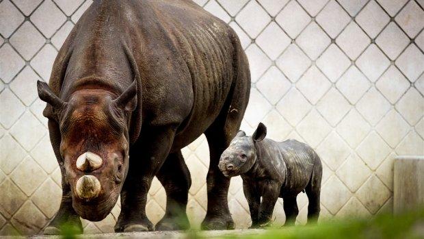 Leuker dan ivoor: investeren in neushoorn-obligaties