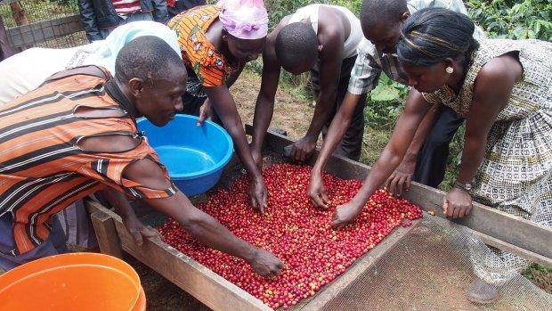 'Mooi verhaal achter koffie moet vanzelfsprekend zijn'