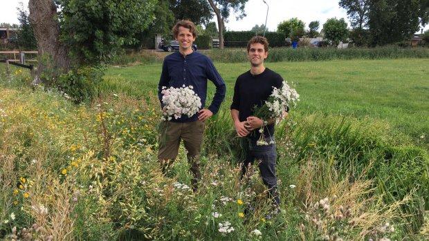 Kruidenthee van eigen bodem: 'Het herstelt de Nederlandse natuur'