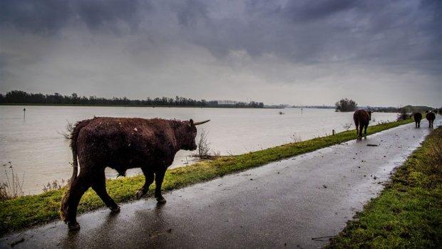 Rechter: ook betalen voor waterschap bij overstromingen