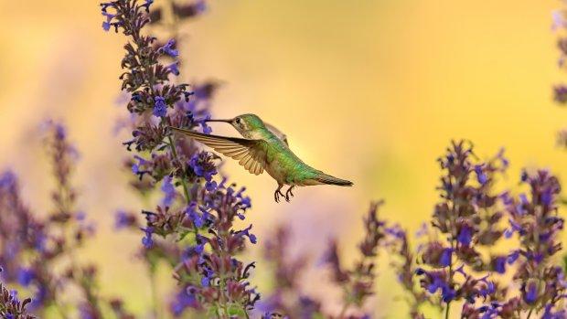 Apps voor natuurliefhebbers: 5 x flora en fauna spotten