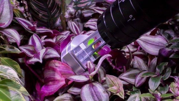Microscoop laat planten praten