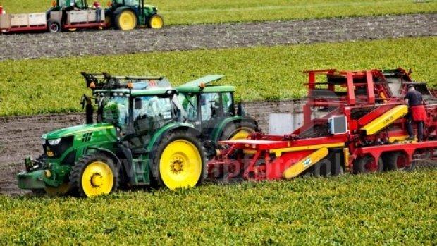 Bollentelers gebruiken verboden landbouwgif nog steeds