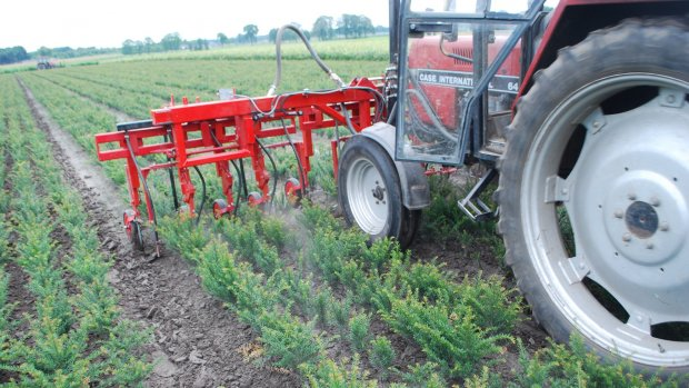 Boomkweker bestrijdt onkruid met lucht