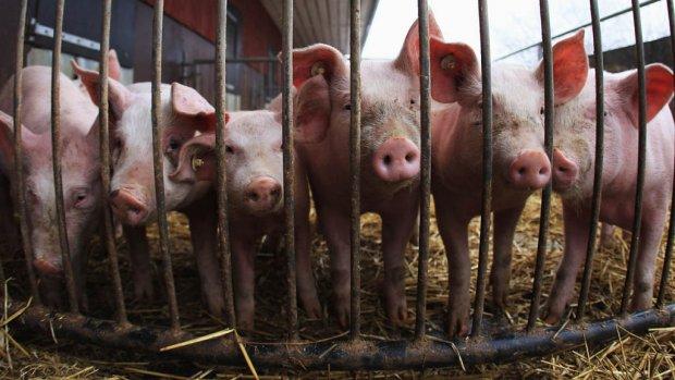 'Het moet klaar zijn met polarisatie in het landbouwdebat'