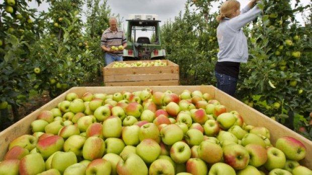 'Voor deze prijzen kan de fruitsector niet blijven telen'