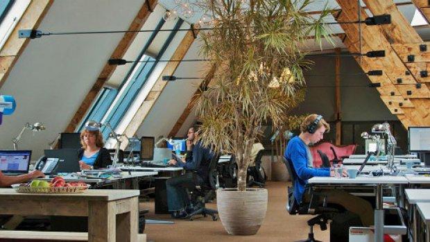 Plant op kantoor zorgt voor minder ziekteverzuim