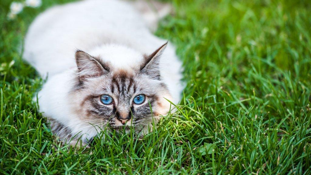 Kattenstront In Tuin : Hoe houd je je tuin kat en onkruidvrij? feiten en fabels rtl nieuws