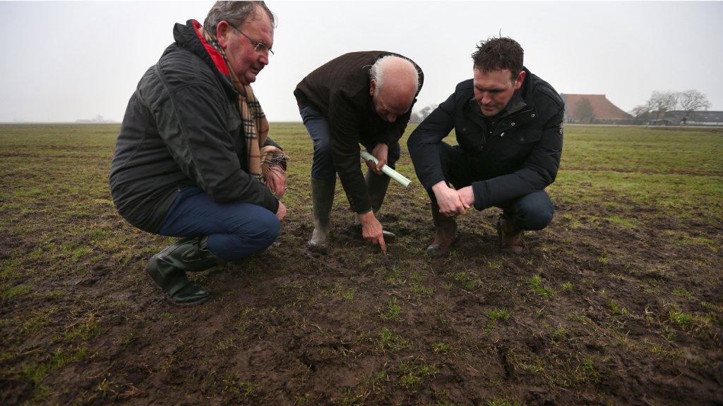 Inspecteurs onderzoeken schade door veldmuizen in een Fries weiland.