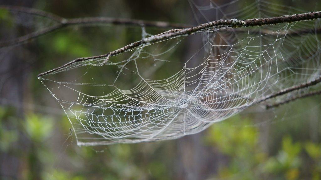 Gigantisch Spinnenweb Op Australisch Meer