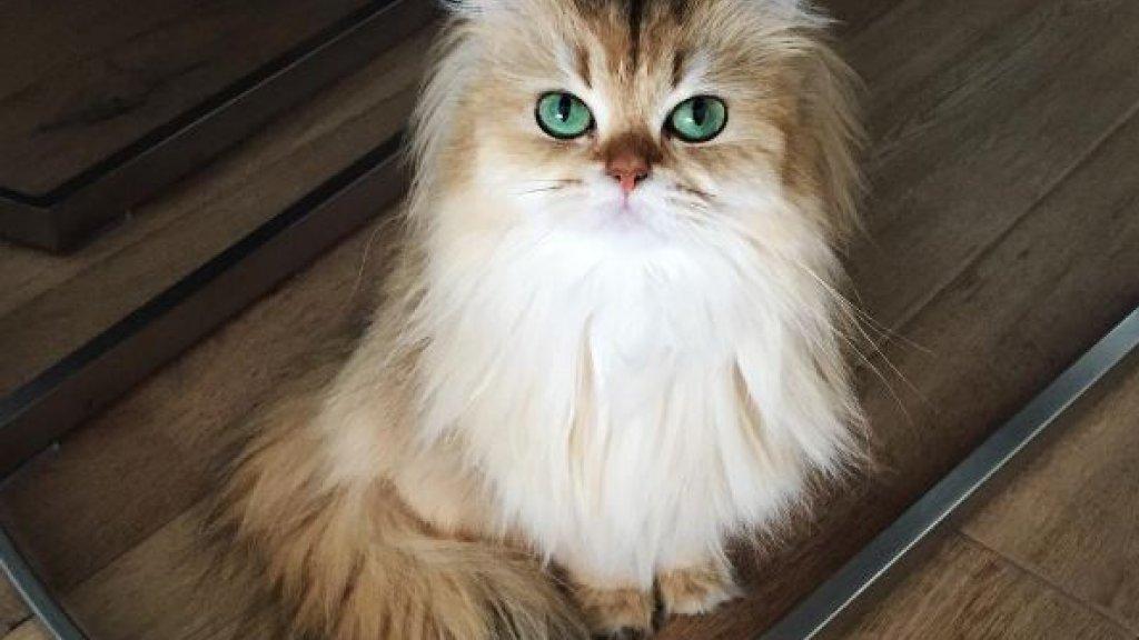 Smoothie, beter bekend als 'de meest fotogenieke kat ter wereld'