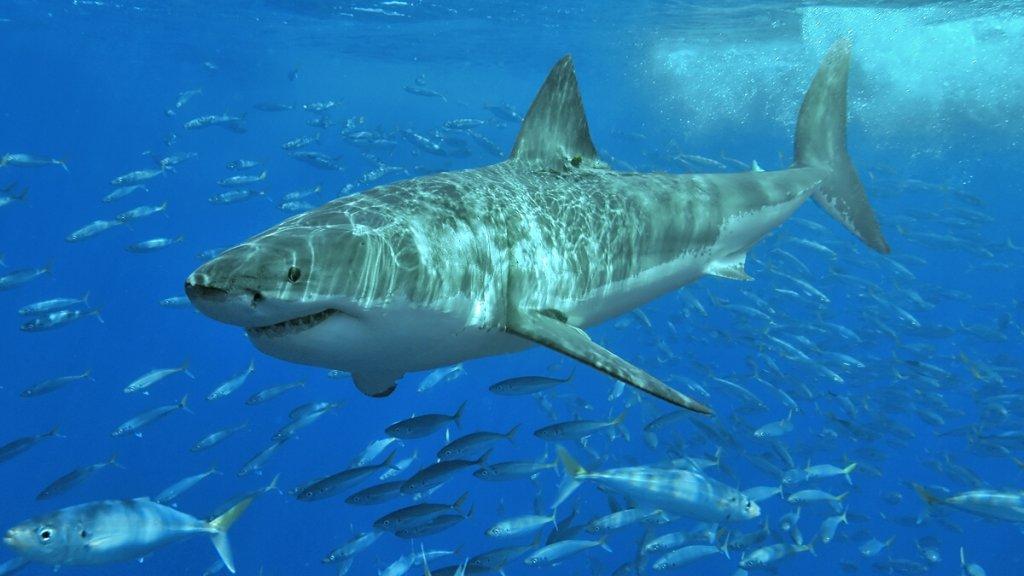 zijn er haaien in turkije