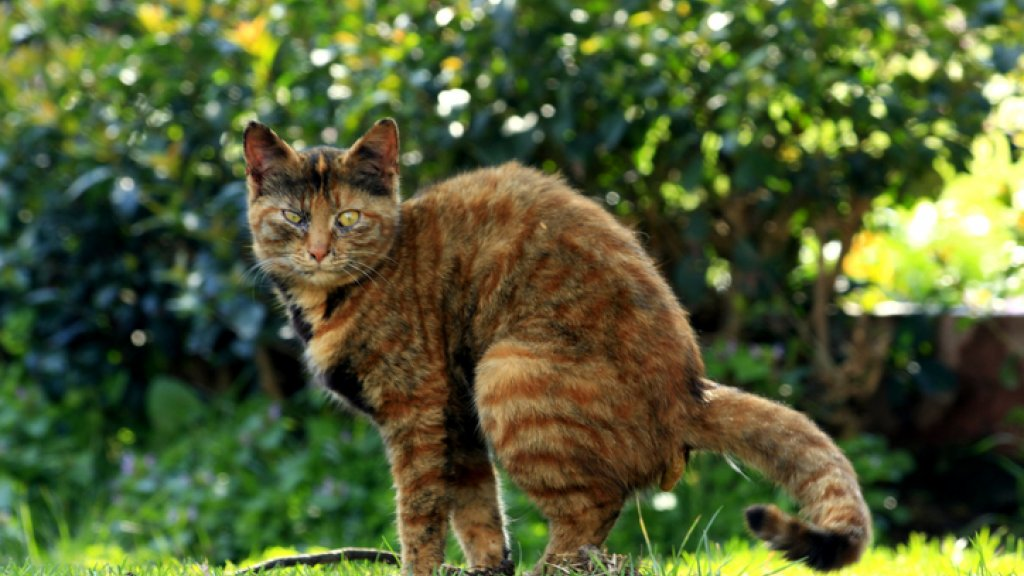 Tuin Afzetten Kat : Klaar met buurkat die in je tuin poept als jouw kat voor