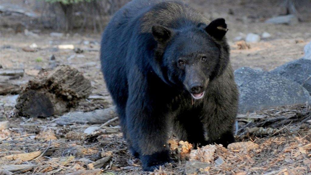 Verwonderend Tiener wordt wakker van beer die in zijn hoofd bijt | RTL Nieuws OZ-54