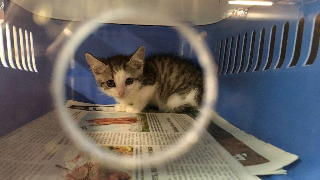 Ongebruikt Katten verplicht steriliseren: moeten we dat in Nederland ook doen PH-77