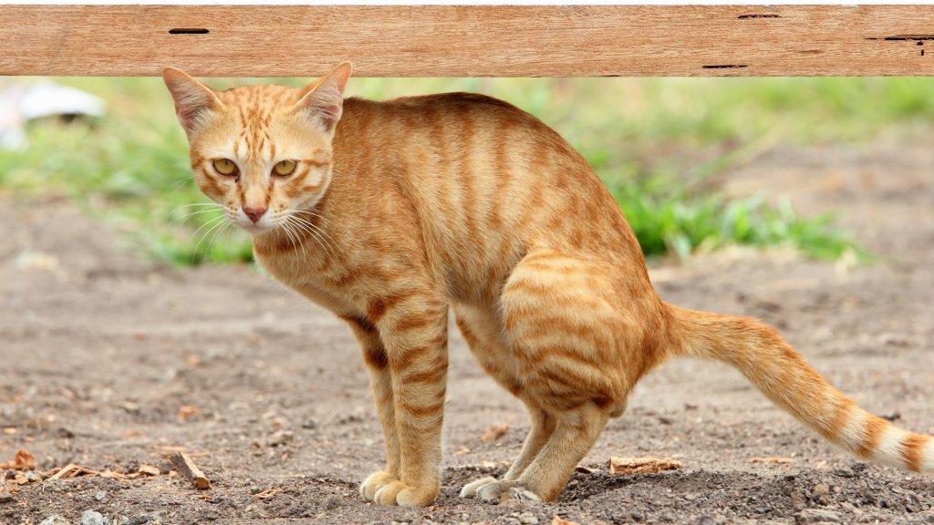 Kattenstront In Tuin : 400 euro boete voor loslopende kat: klaar met kattenpoep! rtl nieuws
