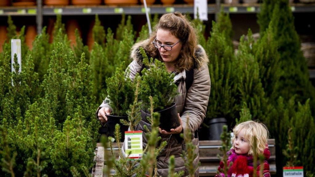 Kerstboom Kopen Let Op Waar Je Koopt Prijsverschil Is Groot Rtlz