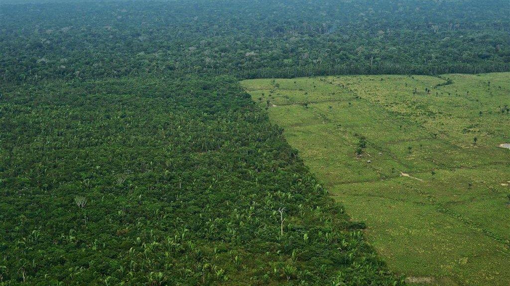 Elke minuut verdwijnt op aarde een bos ter grootte van 40
