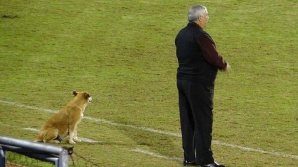 Zwerfhond is voetbaltrainer in Paraguay: Hij begroet de tegenstander met een grom