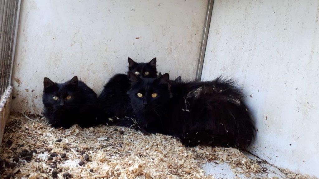 De politie vond 12 verwaarloosde katten