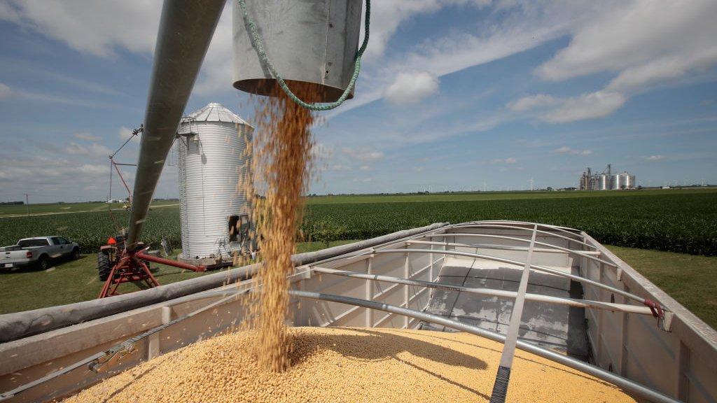 In de VS worden de sojabonen tot eind november geoogst.