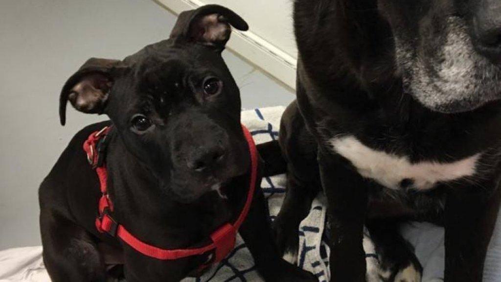 In het asiel vindt Trip troost bij een oudere hond.