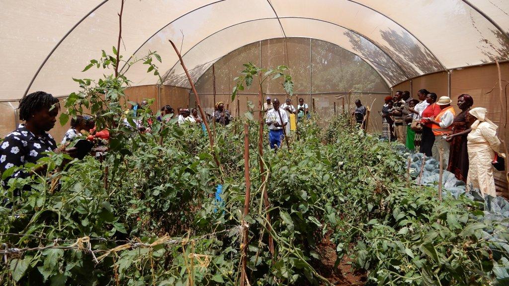 Afrika Leren Bank.Growing Ideas Afrikaanse Boeren Leren Vooruitkijken Rtlz
