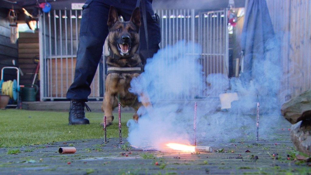 Kleurplaten Politiehonden.Illegaal Vuurwerk Op Instagram Kan Tot Gevangenisstraf Leiden Rtl