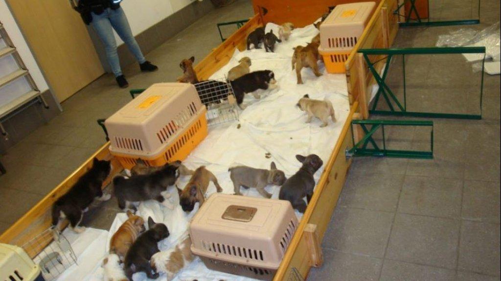 De hondjes werden naar het politiebureau gebracht