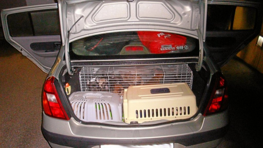 De hondjes zaten onder meer in een hamsterkooi.