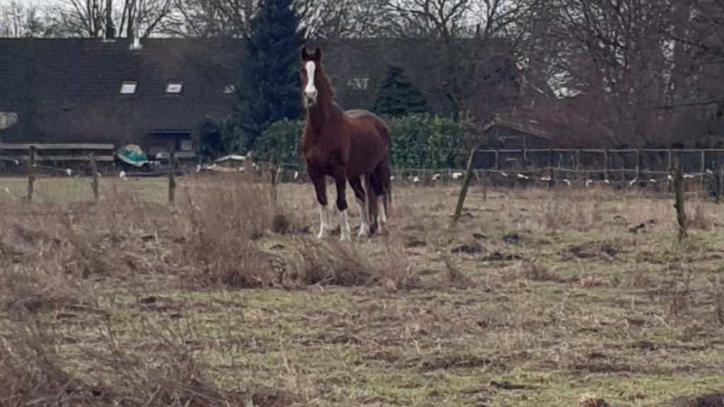 Maartje heeft al een aantal keer melding gemaakt van het eenzame paard
