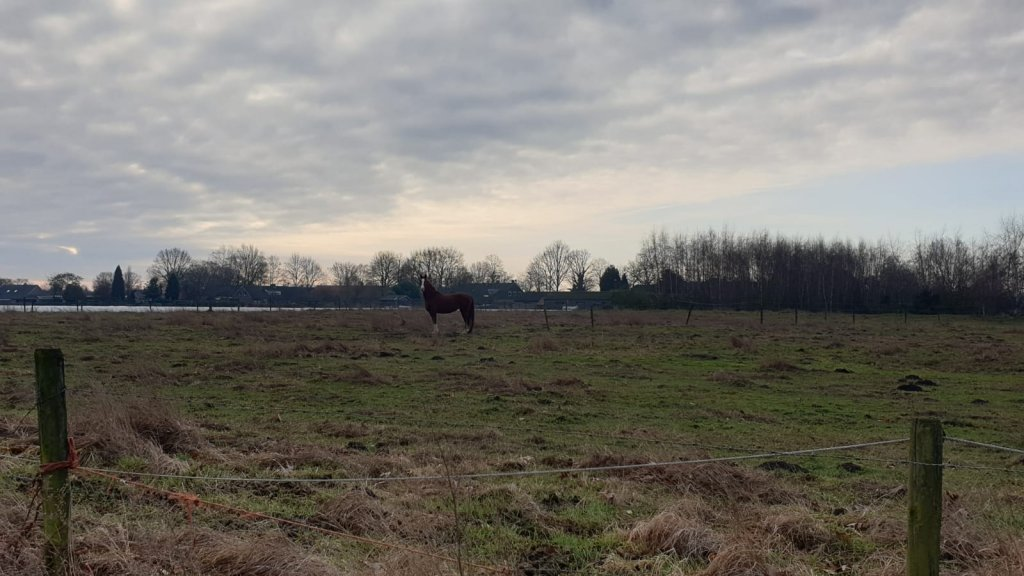 Het paard dat al anderhalf jaar alleen staat