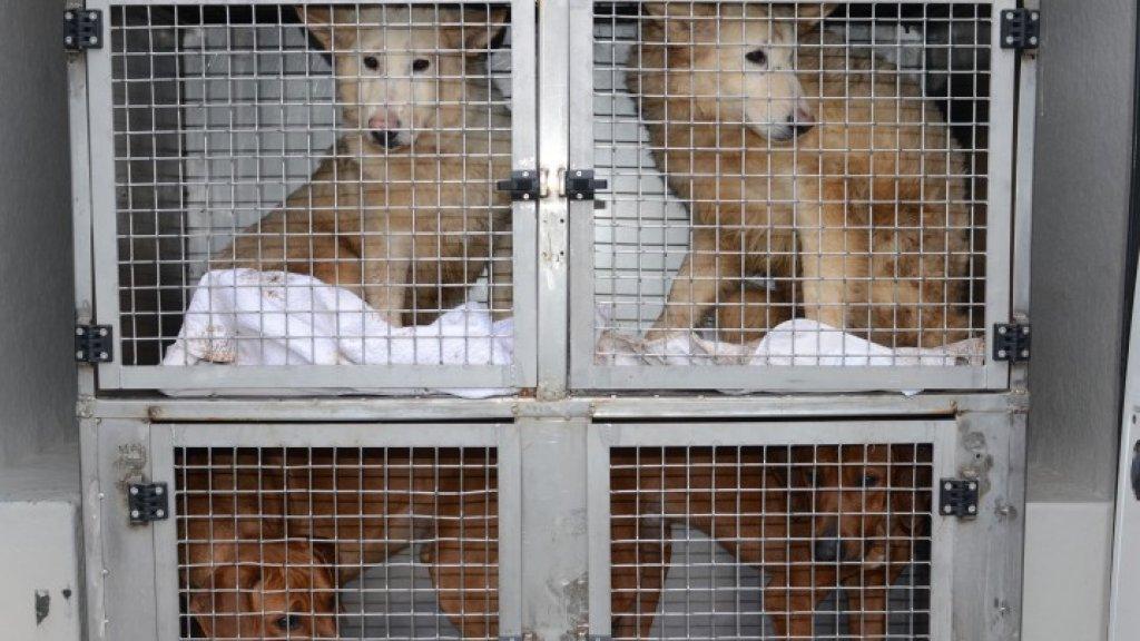 De honden zijn naar een opvangadres gebracht en verder onderzocht