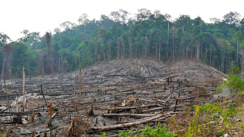 De productie van palmolie gaat vaak gepaard met kappen van het regenwoud. Hier wordt gekapt in Indonesië.