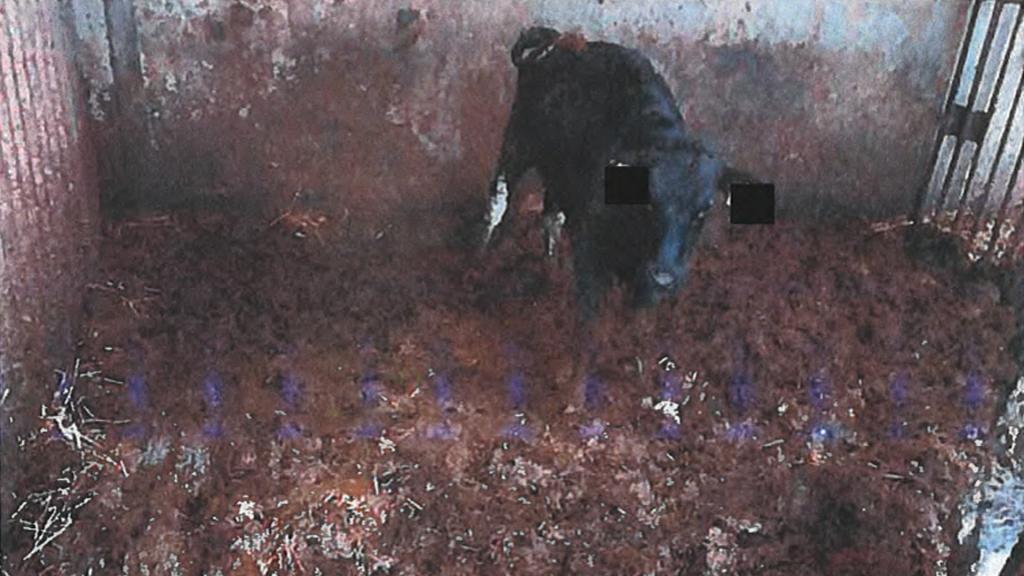 De vloer van een hok van 'boerderij 110' is bedekt met een dikke laag mest en urine.