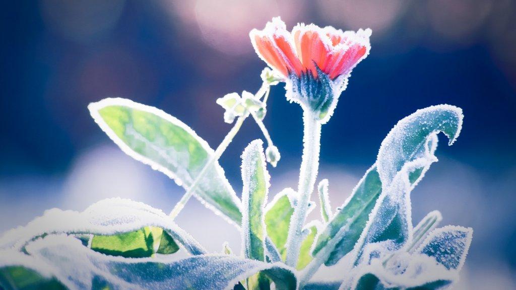 0ee2548483f440 Nachtvorst: zo zorg je ervoor dat jouw plantjes blijven leven | RTL ...