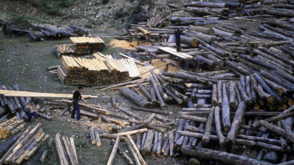 Ongeveer de helft van een boom is bruikbaar om planken van te zagen. De rest eindigt als houtsnippers, schors en takken. BTG Bioliquids maakt daar olie van.