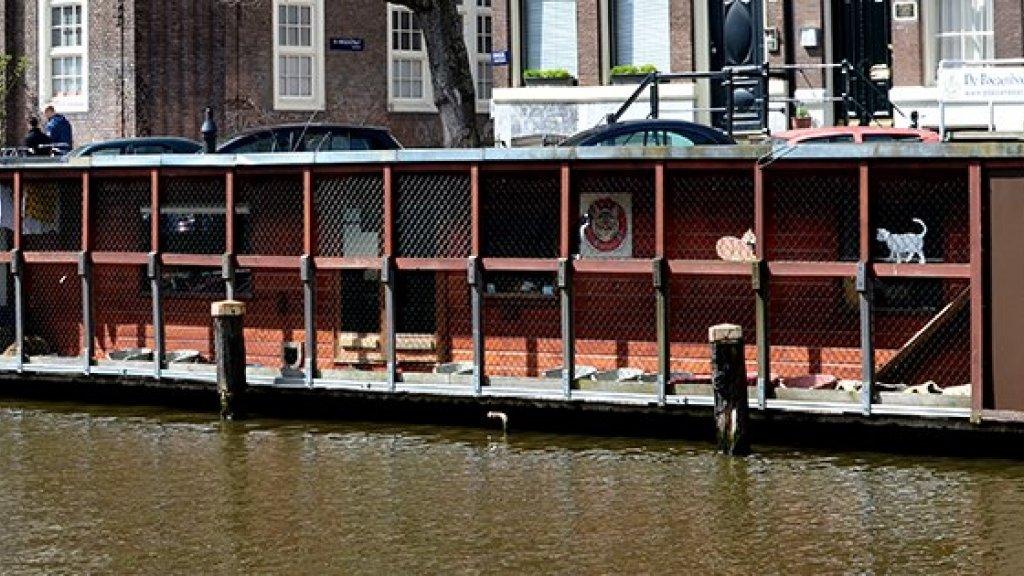 De poezenboot in Amsterdam.