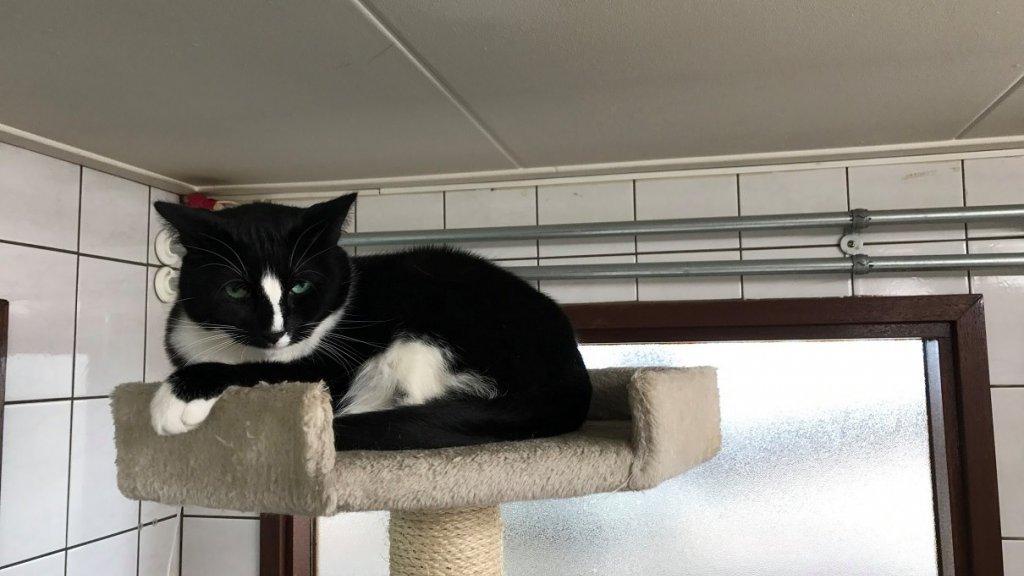 Een kat op de Poezenboot.