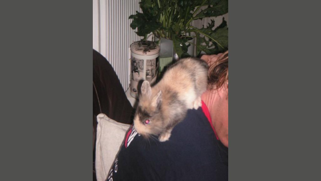 Het konijn dat Willeke cadeau kreeg