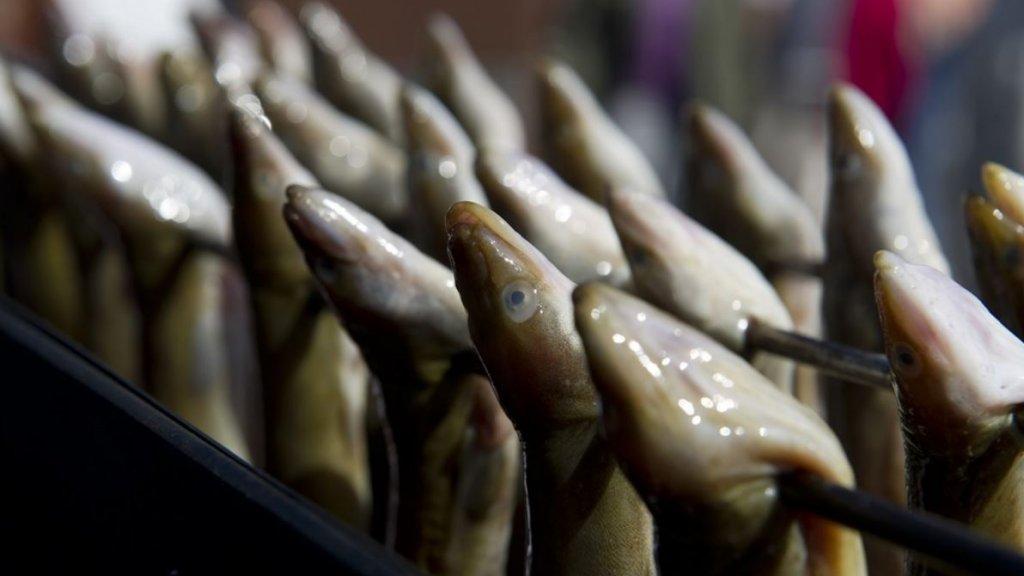 Ook voor paling geldt code rood van de Viswijzer.
