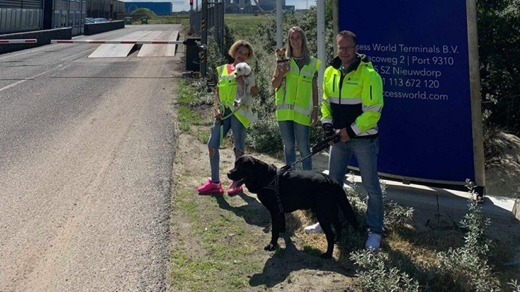 Amber met haar collega's en de honden.