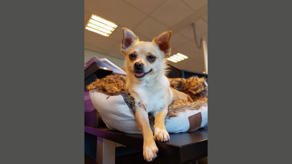 Roxy op het bureau van Amber.