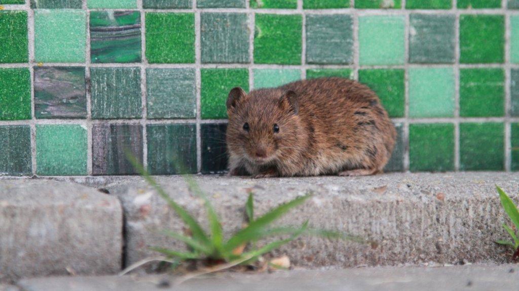 Sommige muizen overleven de val.