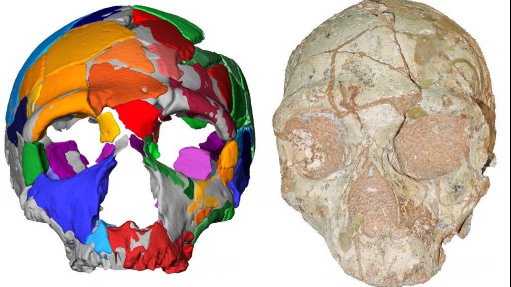 Een computerreconstructie van de gevonden schedel.