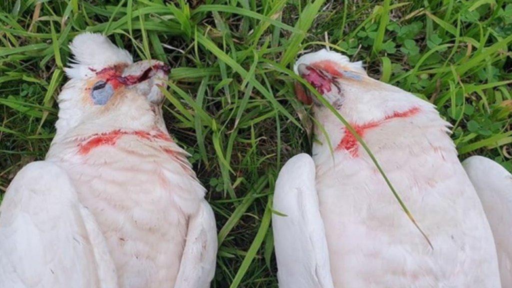 De vogels bloedden uit hun snavel.